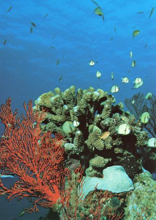 沖縄の海中サンゴ