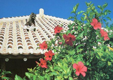 沖縄・シーザーとハイビスカスの花