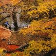 海洋の秋模様