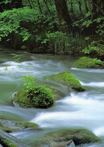 奥入瀬渓流の一場面
